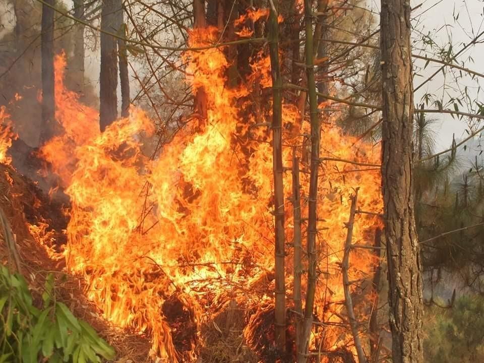 मालारानीकाे जंगलमा दुई दिनदेखी भीषण आगलागी
